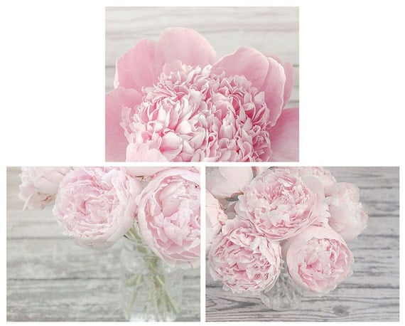 set of 3 pink peony photographs flower print set your choice of size