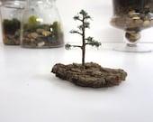 The Ole Scots....One Miniature Tree Terrarium Accessory Miniature Old Pine Tree Terrarium Accessory Terrarium Tree Miniature Garden Tree