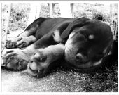 Rottie Puppy Greeting Note Cards & Envelopes Set
