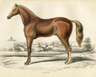 Antique Hand Coloured Bookplate Color Book Plate Print Engraved Jardine 1840 Naturalists Mammalia HorsesEclipse Horse Plate 9
