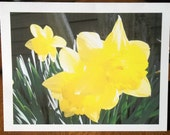 Mother's Day gift: Yellow Daffodil Photo Note Cards, set of 6, with envelopes, in a clear plastic box, photo available in any size
