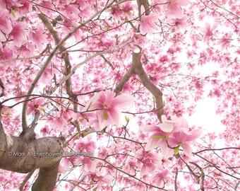 Cherry Blossom Photography DC bokeh tree sakura Pink Flower Photos Peach Home Decor Spring Flowers Wall Decor Washington DC Print Flowers