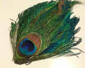 Peacock Sword-Eye Feather Pad