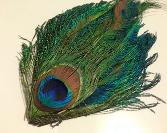 Peacock Sword-Eye Feather Pad