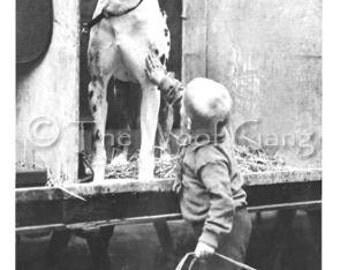 Vintage Dog Card with Great Dane--Zazo, Crystal Palace Dog Show, London, c. 1910