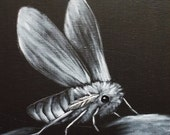 Original Black and White Moth Oil Painting