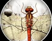 Art Glass Cabochon - Dragonfly 1
