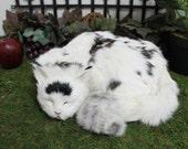 Black & White Sleeping Cat Adorable Furry Animal Taxidermy Figurine Decor Kitty