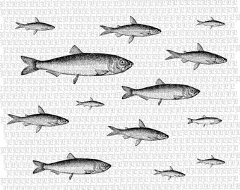 Fish Digital Collage Graphic Download Printable Image 2416