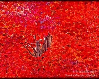 The Last Red Leaves of Autumn E44