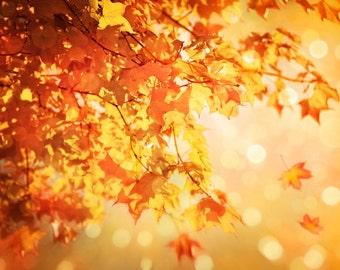 Nature Photography, Autumn leaves, Fall, Orange,Tree, Bokeh, Fine Art Print, Home Decor