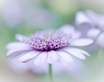 Floral Photography, Flower Photography, Purple Daisy Macro 8x10 print. Floral Purple Flower, Home Decor, Wall Art, Romantic, dreamy, shabby
