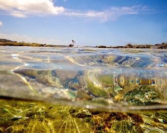 Underwater Photography, Sea Life, Australian Beach Photos, Fine Art Photography, Beach photos, Sea Life, Pelican Photos, Underwater Photos