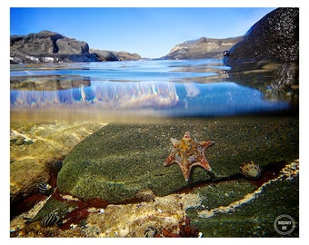 Sea Stars, Underwater Photography, Starfish Photos,Sea life photos,Australian Beach Photos,Starfish Photography,Underwater Starfish Photos