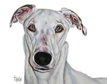 Greyhound Salgreys Gorgeous ,Art print size 8x12 inch