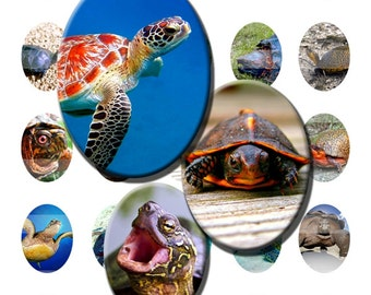 Turtle Sea Ocean Reptile Baby Digital Images Collage Sheet 30x40mm Ovals INSTANT Download O38