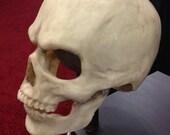 comfortable realistic Skull mask in bone finish