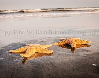 Starfish Photo Beach Photography Romantic Stock Photography Digital Download - screen saver - computer wallpaper from William A Britten
