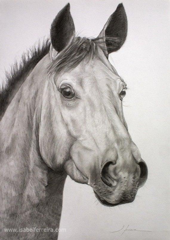Disegni di cavalli a matita imagui for Cavallo disegno a matita