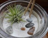 items similar to miniature zen garden with air plant galveston seashells river rocks and white. Black Bedroom Furniture Sets. Home Design Ideas