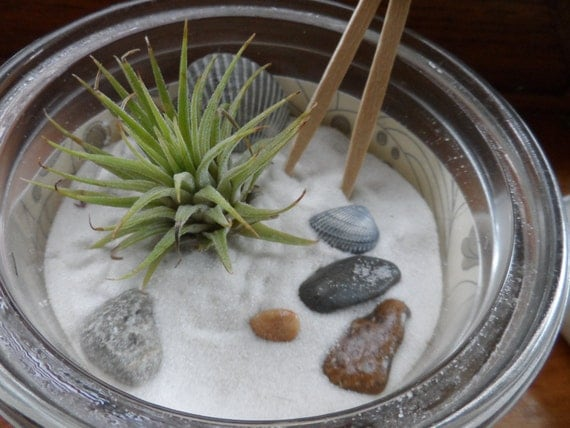 Items similar to miniature zen garden with air plant for Jardin japonais miniature