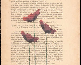 Flower prints on sheets of paper. Page 11, the three poppies.
