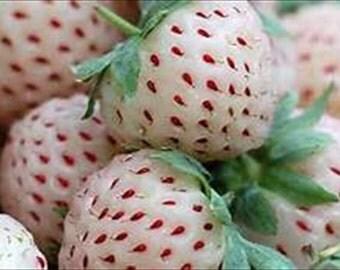 White Strawberry Fragaria vesca * Organic!!  Non-Gmo 25 seeds