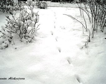 Foot prints in snow- Fine Art Photography - Digital photography download, instant download, winter photography, Wall decor, snow photo, b&w