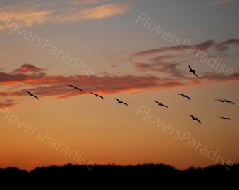 Brown Pelicans Flying at Sunset Photograph // Pelican Photograph // Florida Nature Bird Photo Print