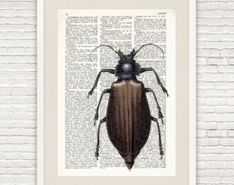 Dictionary Art Printed On VintageDictionary Page. Bug  #015