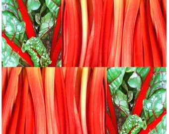 80 x Rhubarb Red Swiss Chard Seeds - Beta vulgaris var. cicla - DELICIOUS & ORNAMENTAL - 50 - 60 Days