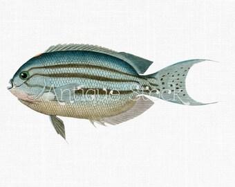 Fish Image - Clip Art Lamarck's Angelfish 1828-1849 - Digital Sheet for Prints, Collages, Artworks, Greeting Cards, Transfer, Crafts...