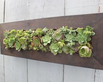 Handmade Cedar Living wall. Succulent Hanging Planter. Awesome Gift!