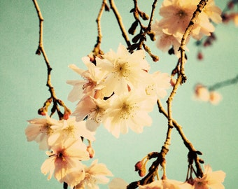 Spring Trees 2 Nature Shabby Chic Floral  Home Decor Wall Art Fine Art Photography