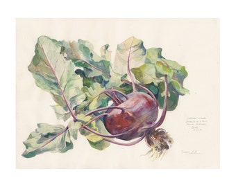 Red cabbage painting - turnip cabbage gouache painting - PRINT - Turnip Kale painting, watercolor & gouache - Turnip vegetable still life