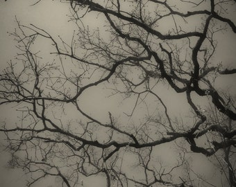 Bare Branches, Nature Photography, Sepia Photography, Fine Art Photography, Winter, Tree, Silhouette, Branches, Minimualistic Art