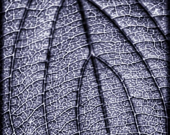 Blue Macro Leaf, Nature Photography, Leaf Photography, Macro Photography, Blue