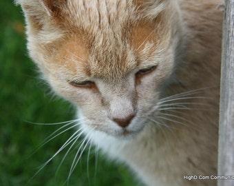 Creemore Kitty