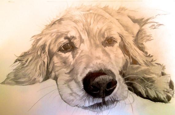 Articles similaires crayon chien golden retriever impression crayon illustration photo de - Dessin golden retriever ...