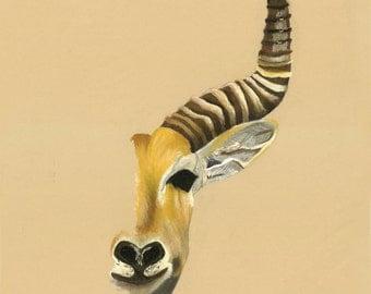 Print of an original pastel drawing of a antelope