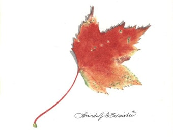 """Drawing of Maple leaf, """"itsy print"""" 4"""" x 4"""", colored pencil, photo realistic, art, illustration, print on 80 lb smooth white archival paper"""