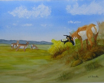 Pronghorn Antelope....Original Watercolor Painting....Wildlife Painting