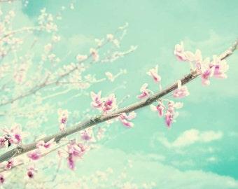 Flower photography, cherry blossom photo, flower photo, spring decor, nature decor, home decor, blue, pink, botanical, nature photography