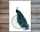 Peacock decor - bird art, shabby chic, bird artwork, living room decor - penny farthing