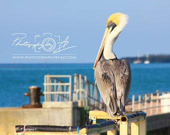 Pelican Stands Watch, Fine Art Photography Print, Sizes Vary, Miami Beach FL