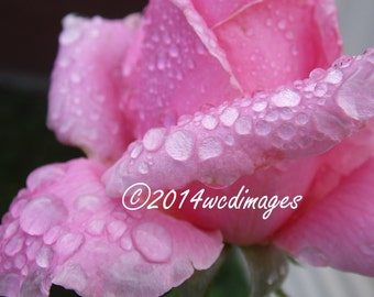 Digital Art Photography Rain Drops on Rose Petals Fine Art Home Decor