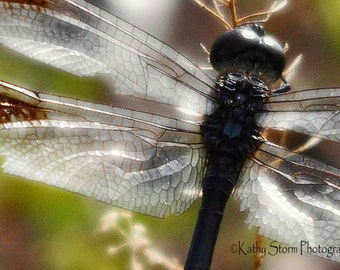 Dragonfly, Fine Art, Nature Photography, Close-Up, Wall art for home décor,  FREE SHIPPING.