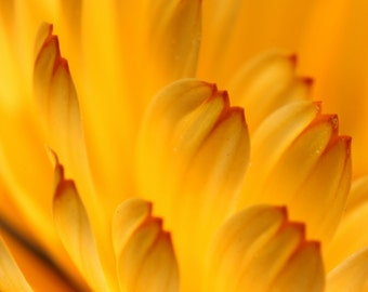 Yellow flower close up, flower photography, floral art.