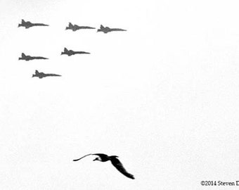 F-18 Fighter Jets, Air Show, Seagull and Jets Humor Photo