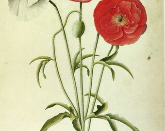 Red Poppy by Ehret SALE Botanical Book Plate  3, get 1 Free
